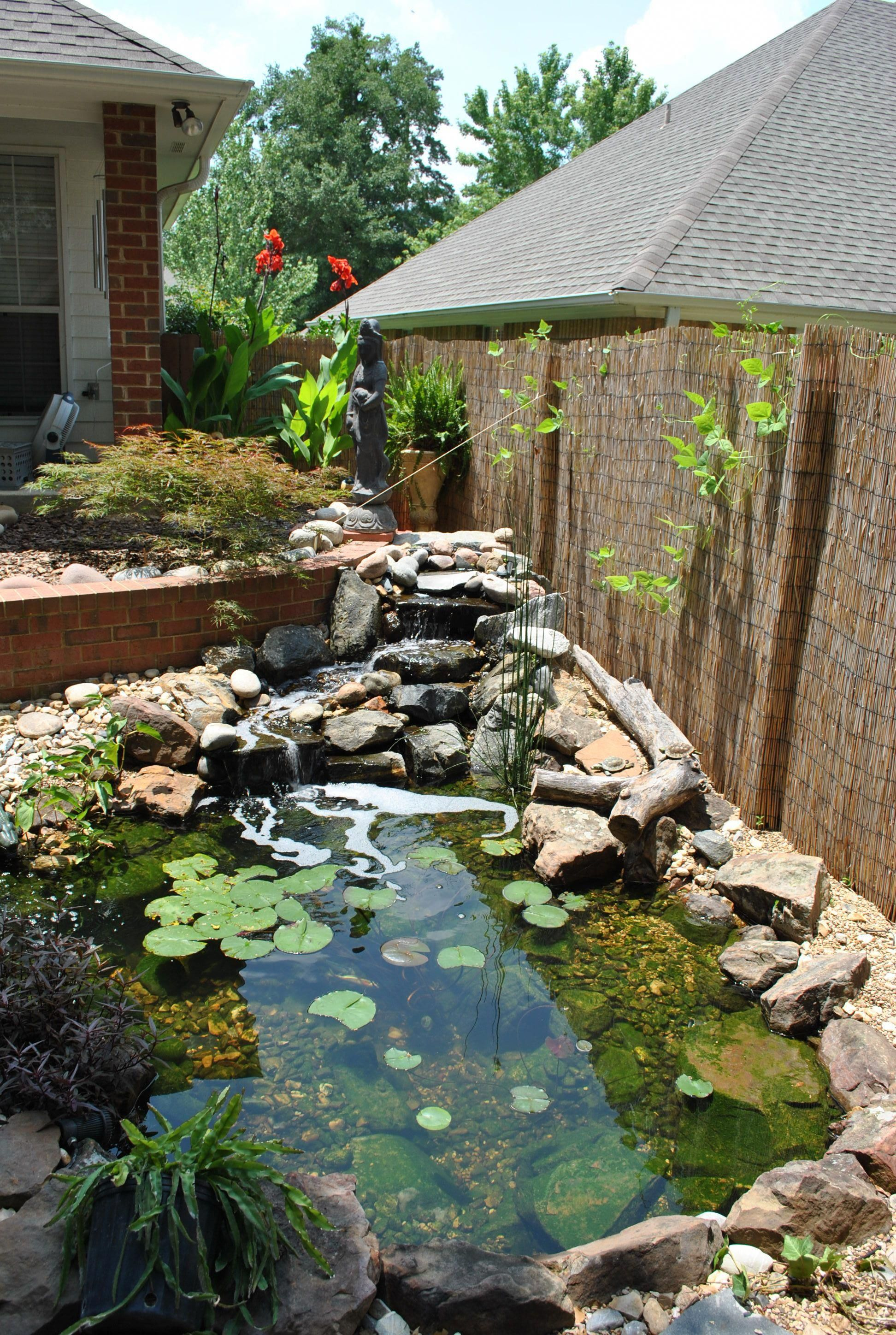 Backyard Pond In Frisco Tx With Awesome Bamboo Fence Pond Landscaping Ponds Backyard Fish Pond Gardens