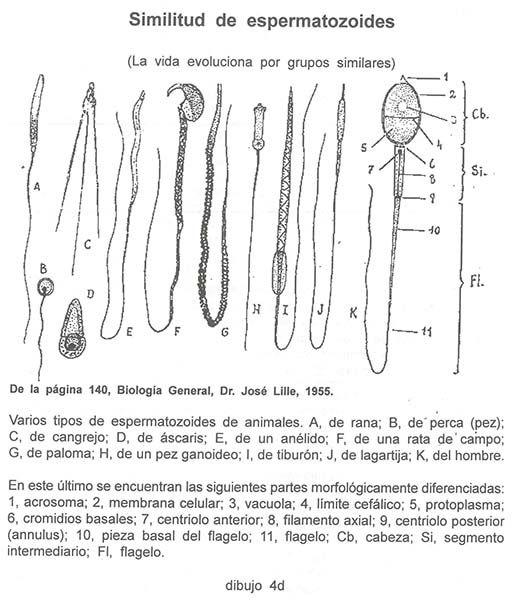 dibujo_4d.jpg (513×600)   Fisiología   Pinterest   Fisiología