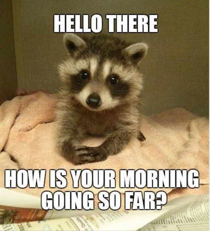 Image result for good morning animal memes
