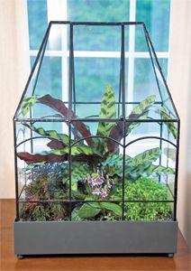 Terrarium Plant Collection Flowers Plants Gardening Pinterest