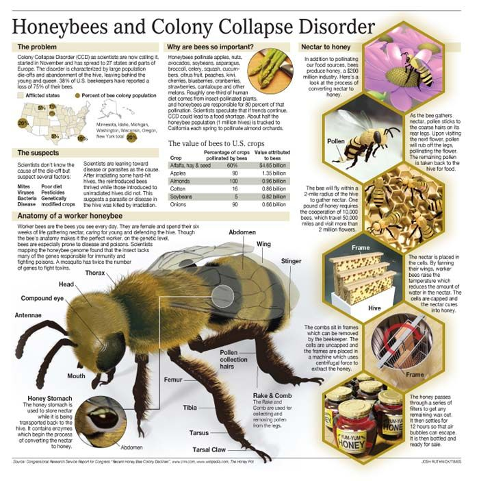 colony collapse disorder Colony collapse disorder killed 40% of bees last year that costs the us economy billions it's caused by pesticides is the government doing enough.