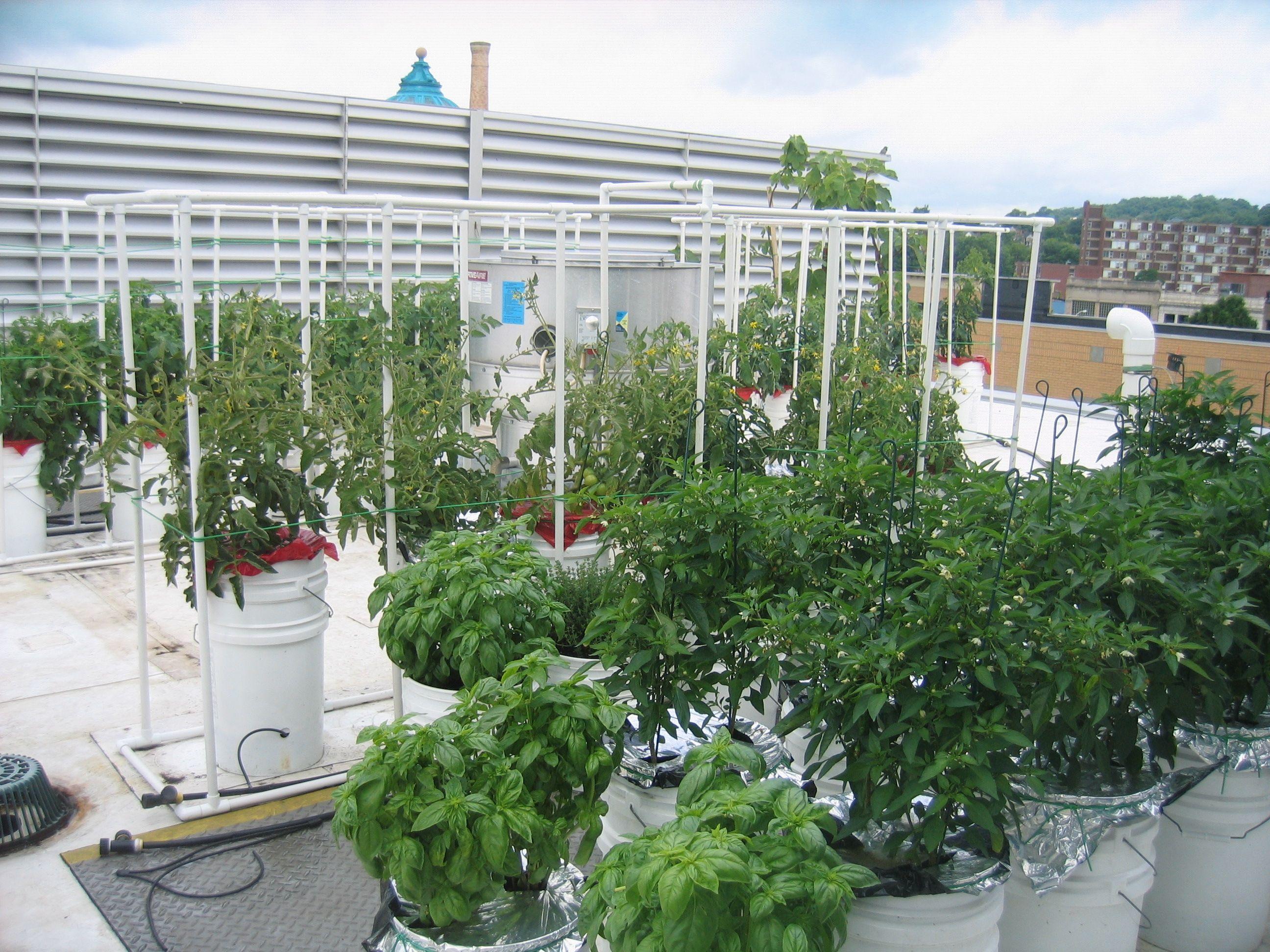 Dinette Restaurant Rooftop Garden -- 52 Containers
