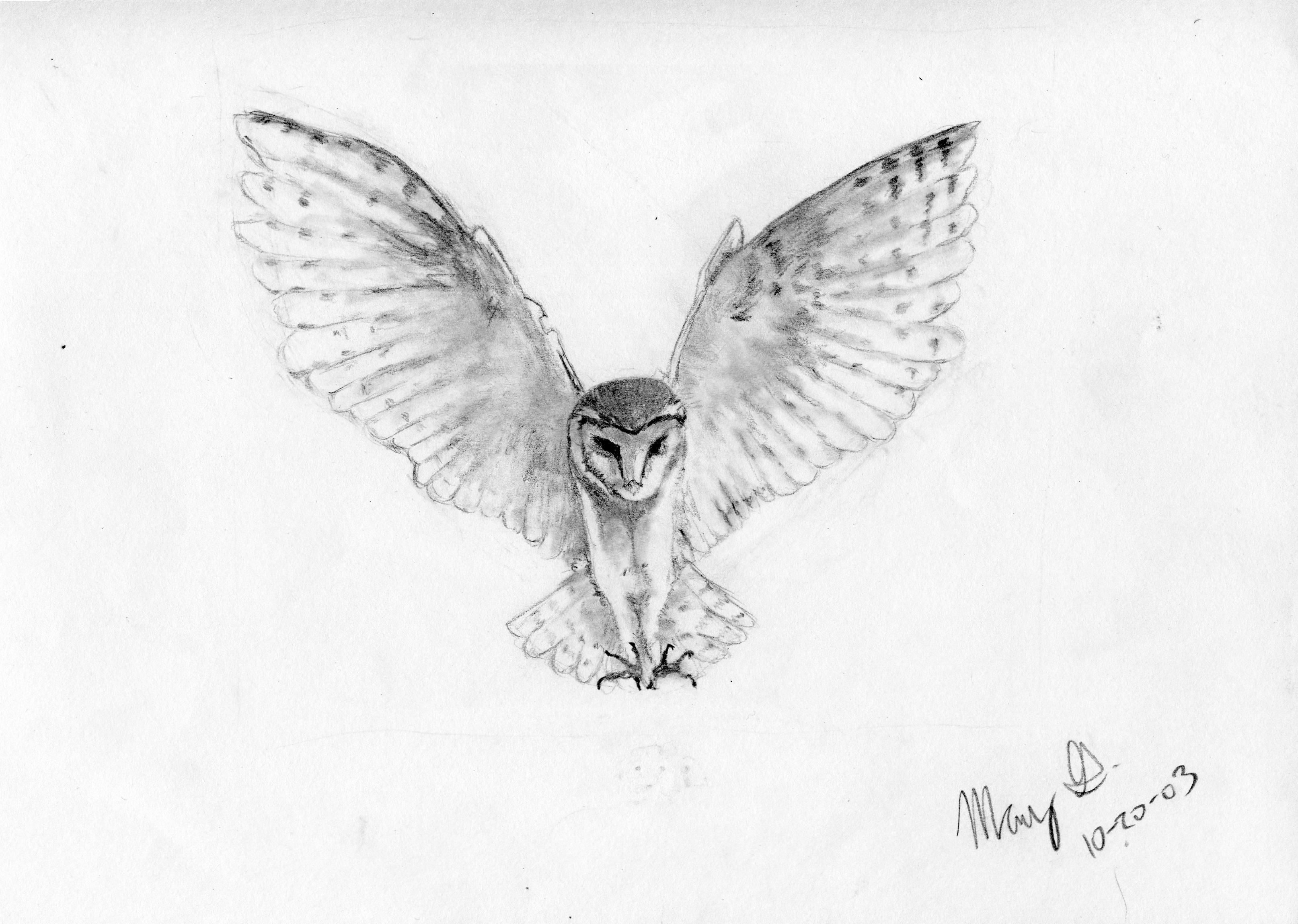 Flying owl drawings black and white - photo#26