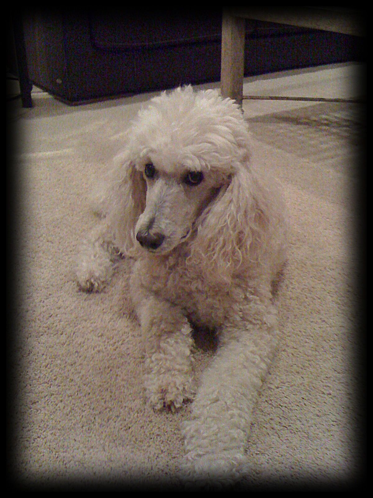 """""""Loving, dear Doc...now playing with his brother, Ronny...across the Rainbow Bridge."""""""