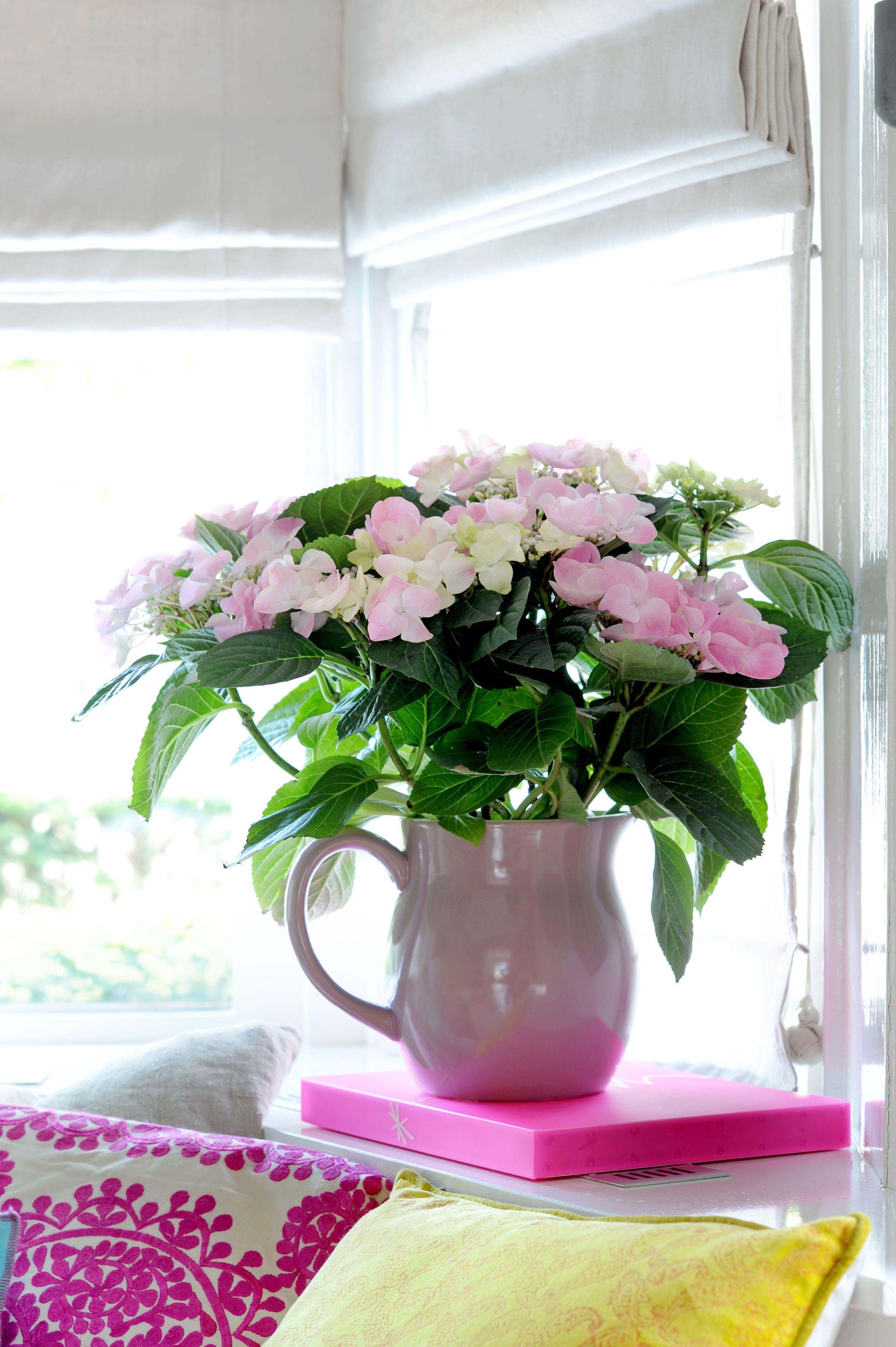 De Woonplant van de Maand Maart: de Hortensia   Flores   Pinterest ...