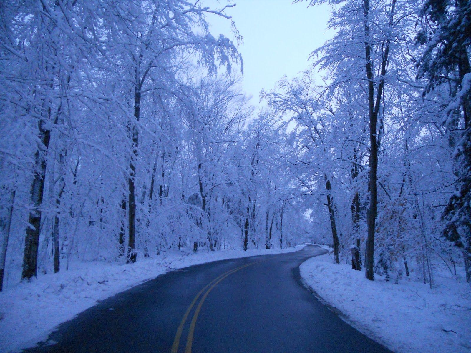 Falling Upward Wisconsin Winter Door County Wisconsin Winter Trees