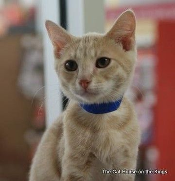 Aldo is available for adoption on AllPaws.com. View and share Aldo's profile and help him find a home!