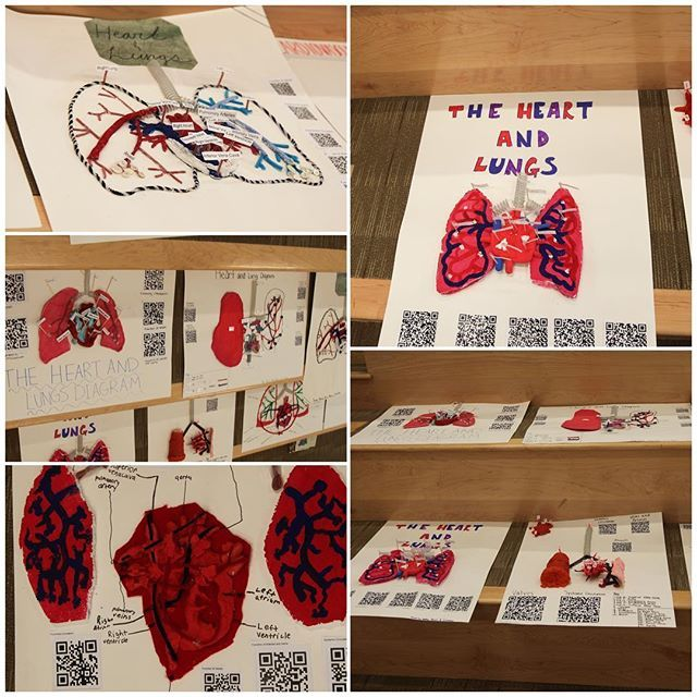 3-D diagrams of the heart and lungs designed by 8th ...