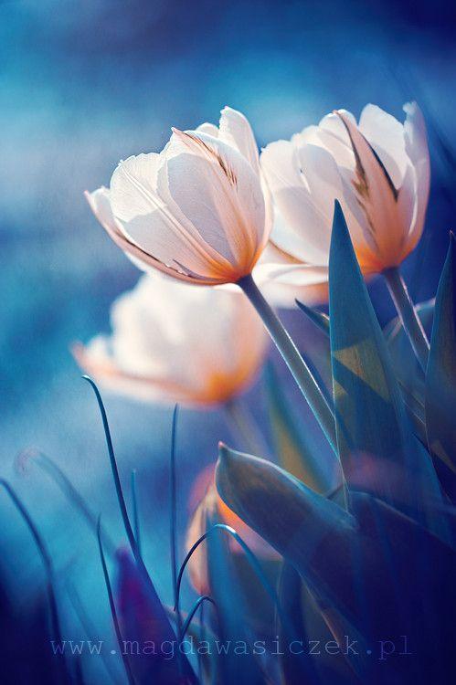 pin von ana ortiz auf tulipanes pinterest sch ne blumen blumen und blumen fotografie. Black Bedroom Furniture Sets. Home Design Ideas