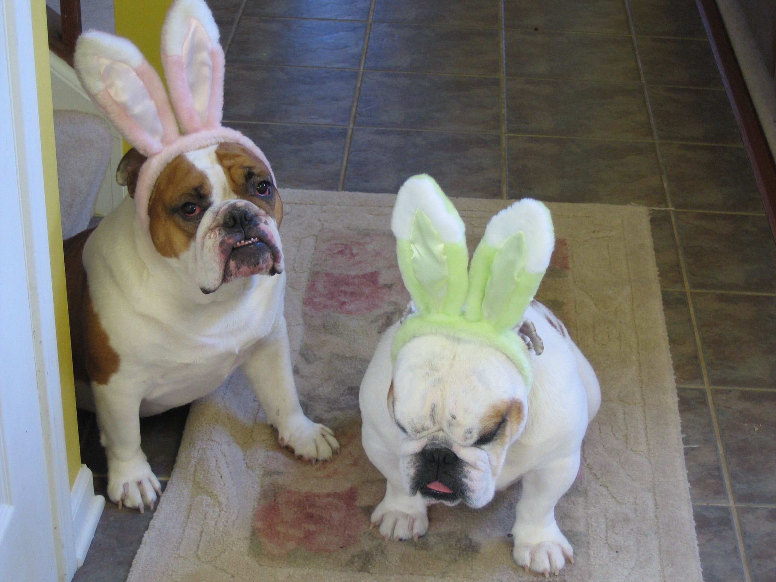 What the heck the Easter Bunny really!!