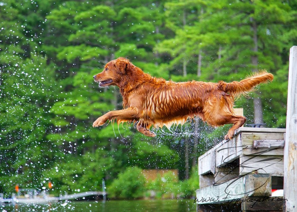 Dock Dogs — Tippykayak Dog Training & Photography in 2020