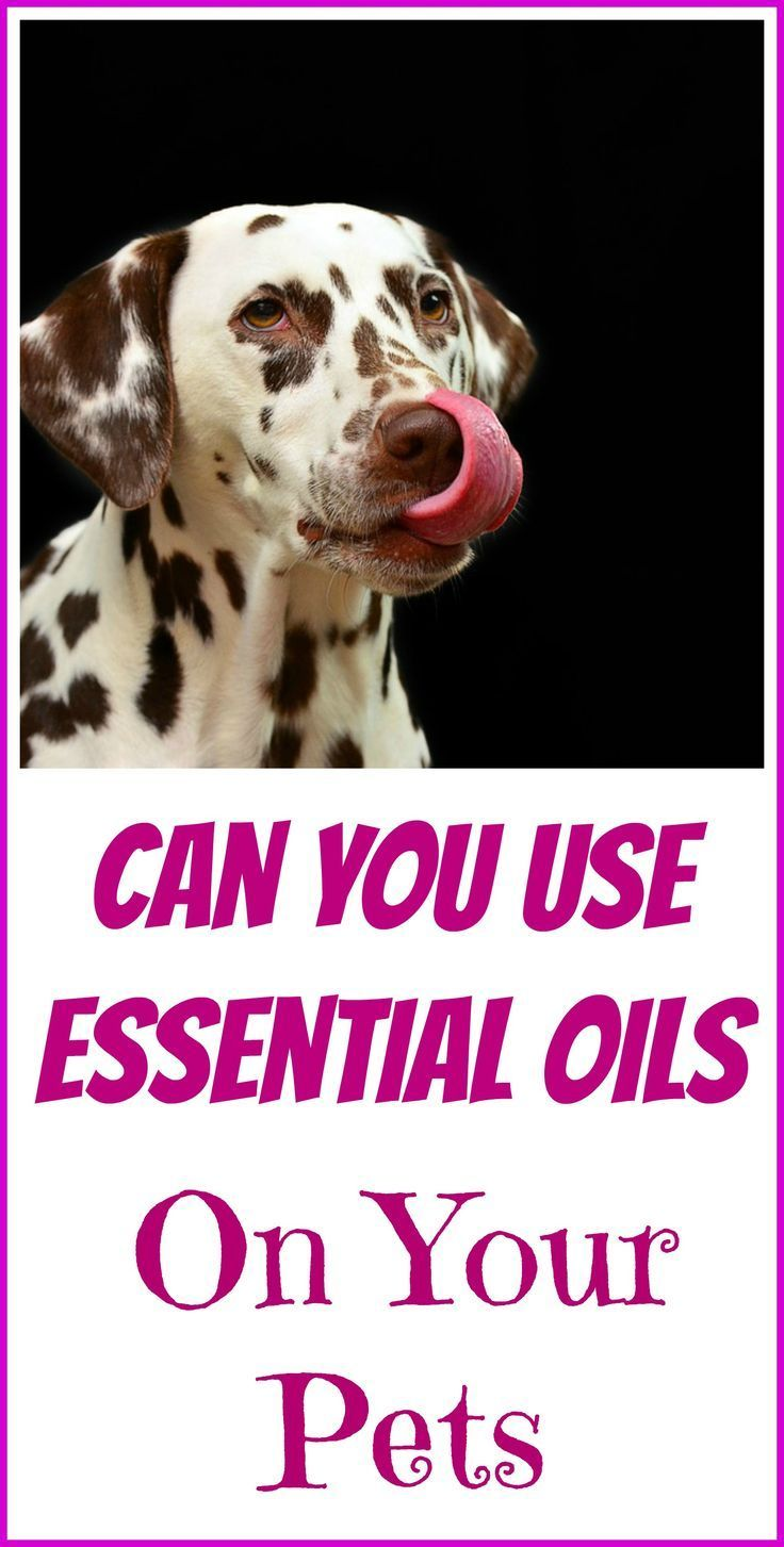 Can you use essential oils on pets essential oils for