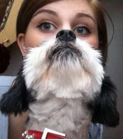 Ce chien cache sa maîtresse .. Photo amusante