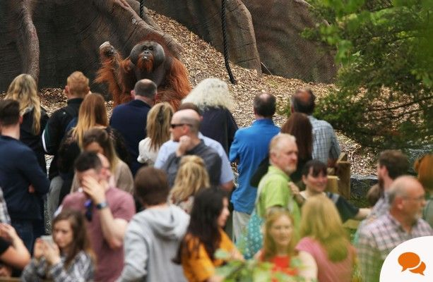 Even in the best circumstances, it's impossible for zoos to meet all the unique needs of the various species they hold captive, writes Elisa Allen.