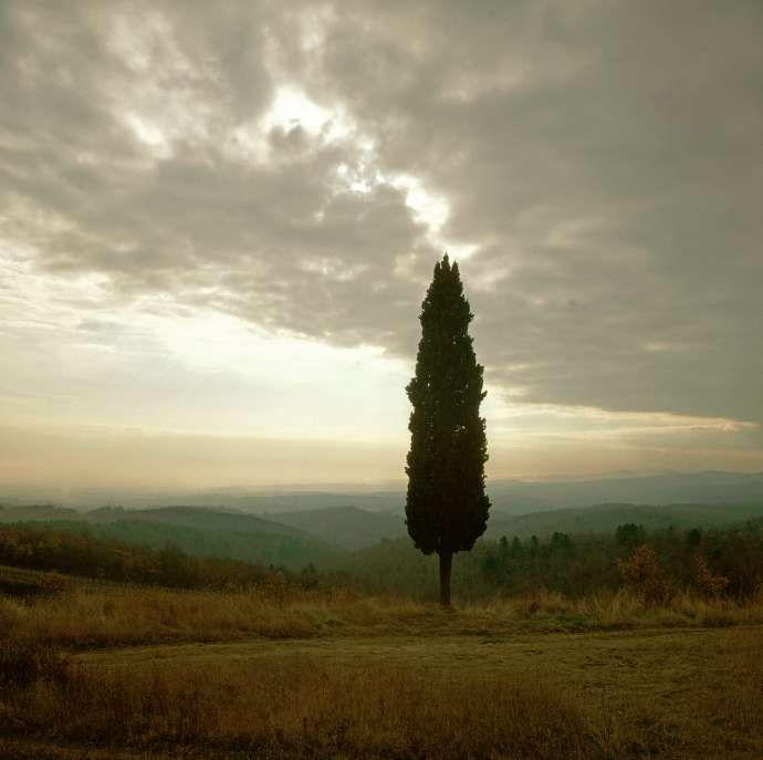 Sinalunga, Tuscany, Italy (030015) Charlie Waite