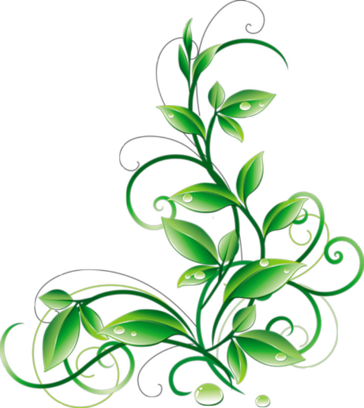 Floral Green Leaves And Water Droplets PNG Clipart