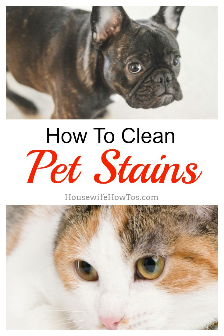 How to clean pet stains with images pet stains clean