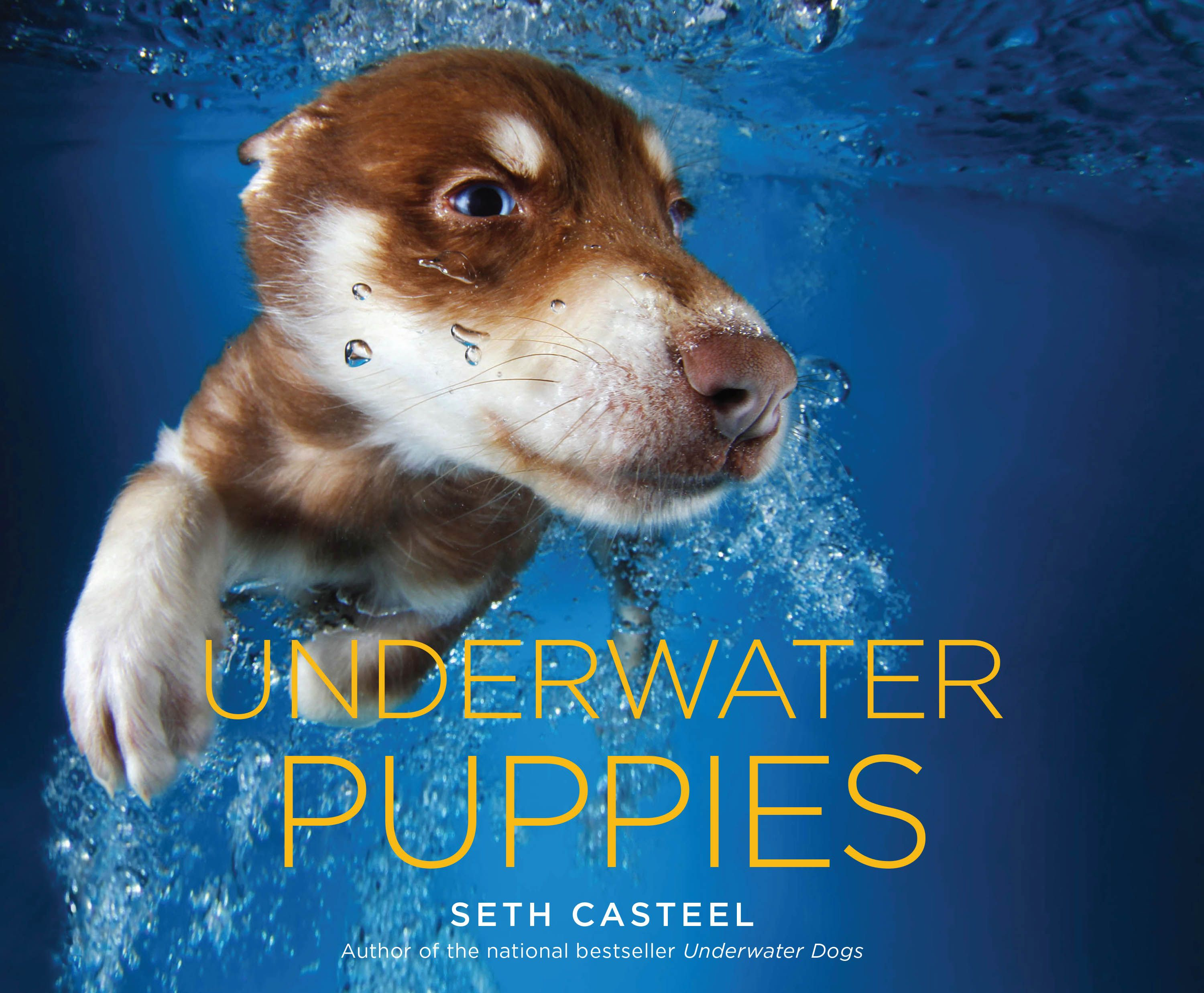 """Photographer Seth Casteel dives in with these cuties in his new book, 'Underwater Puppies.' It is a follow-up to his previous magnum opus, """"Underwater Dogs."""""""