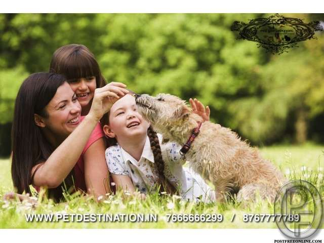 PET DESTINATIONthe brand u can trust upon 7666666299 in