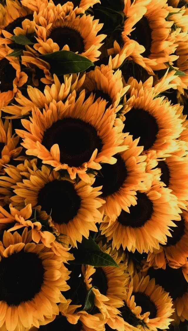 Gadget Geek Meaning In Hindi Father S Day Gadgets And Gizmos Gift Guide While Best Iphone 8 P Sunflower Iphone Wallpaper Sunflower Wallpaper Sunflower Flower