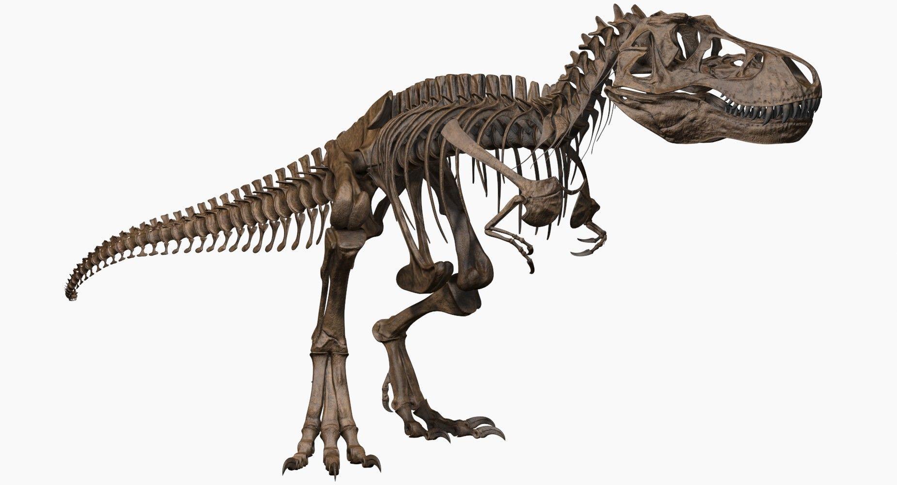 Joseclemente TRex skeleton Skeleton, Rex, Dinosaur cards