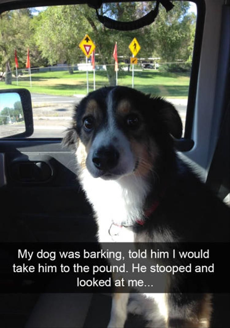 Behold The Funny Dogs Of Snapchat Pics Hilarious - 21 hilarious snapchats that made our day instantly better 6 cracked me up
