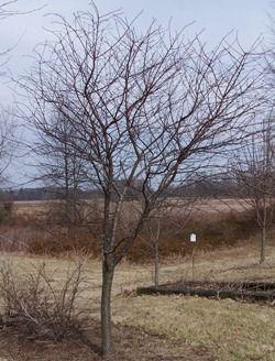 Pruning Fruit Trees Pruning Fruit Trees Tree Fruit Trees