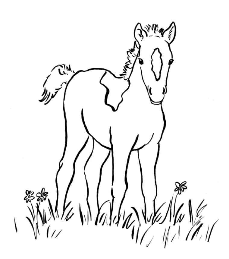 pferde zum ausdrucken (2020) | ausmalbilder pferde zum