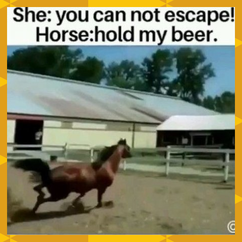 Omg This Horse Has Great Skills In 2020 Funny Horses Funny Horse Memes Funny Horse Videos