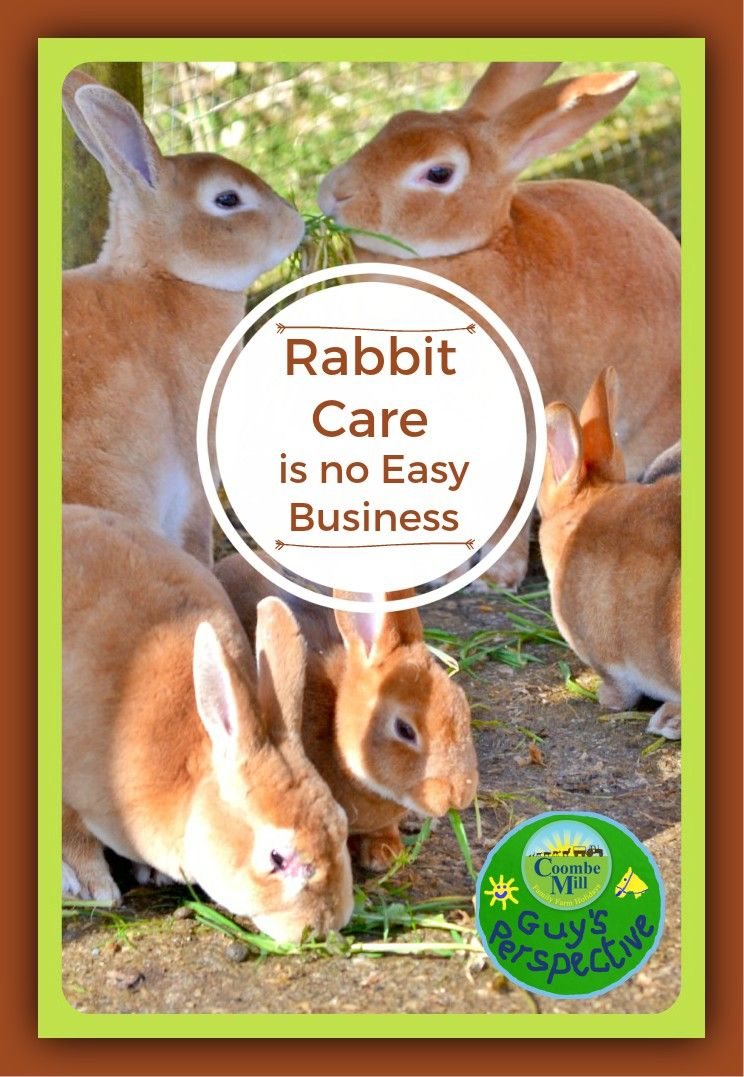 Rabbit Care is no easy business Coombe Mill New Rabbit