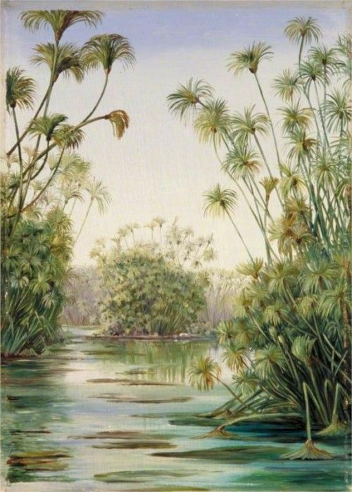 Papyrus Growing In The Ciane Syracuse Sicily By Marianne North