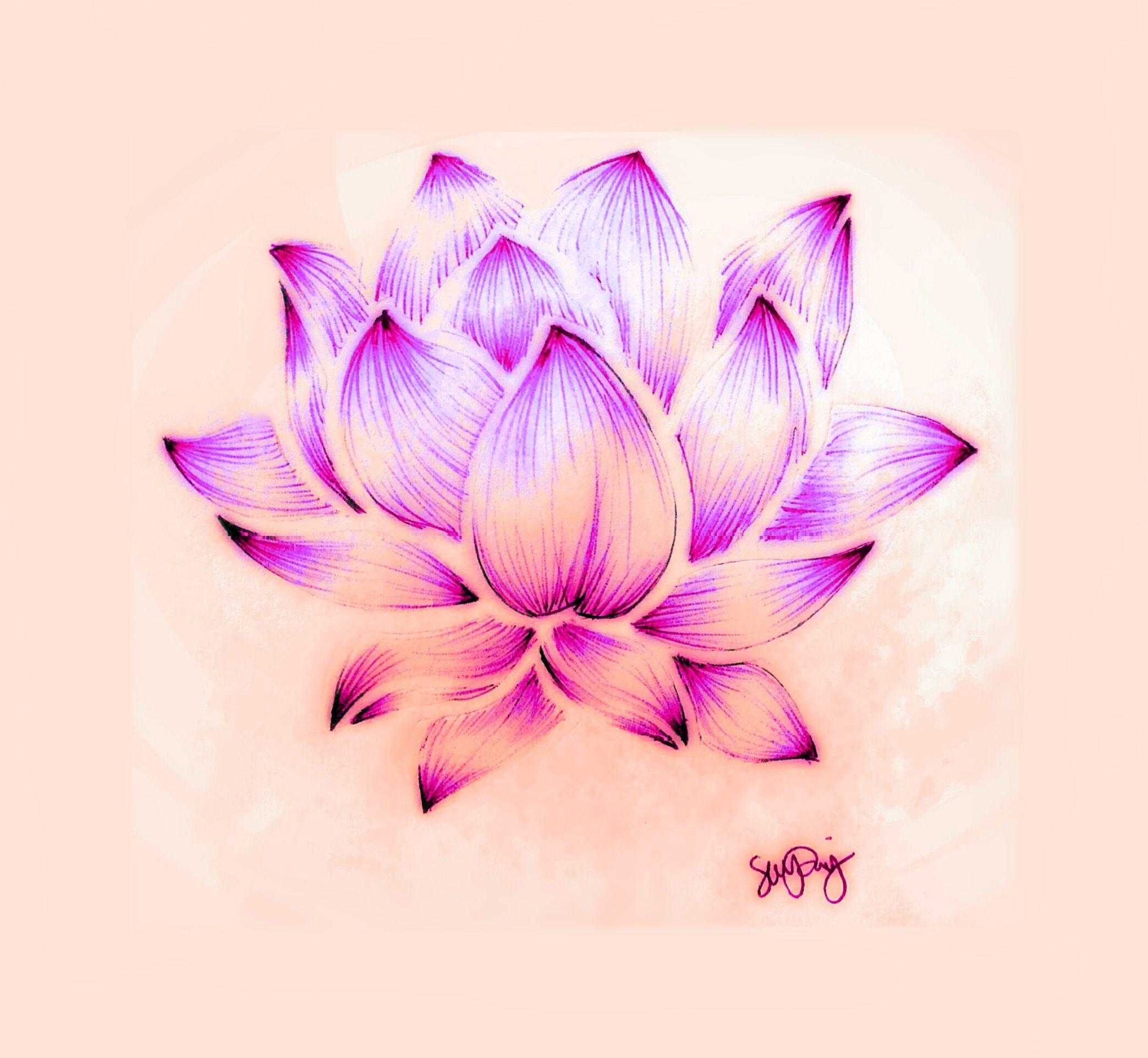 Lotus Flower Drawing Sara Riley Flower drawing, Lotus