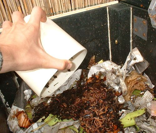 How Many Composting Worms Do I Need?? Find Out How To