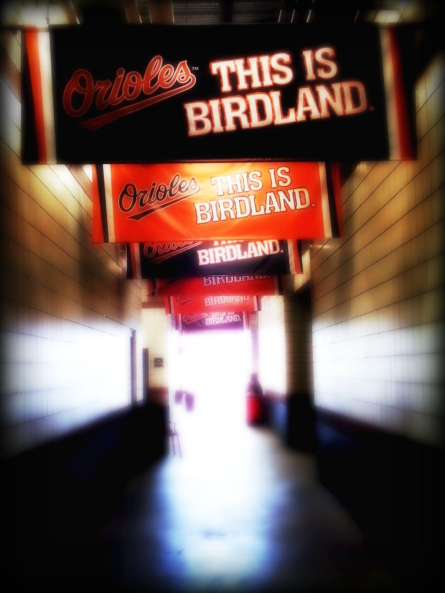 Birdland Hall Baltimore Orioles Baseball Orioles Birdland