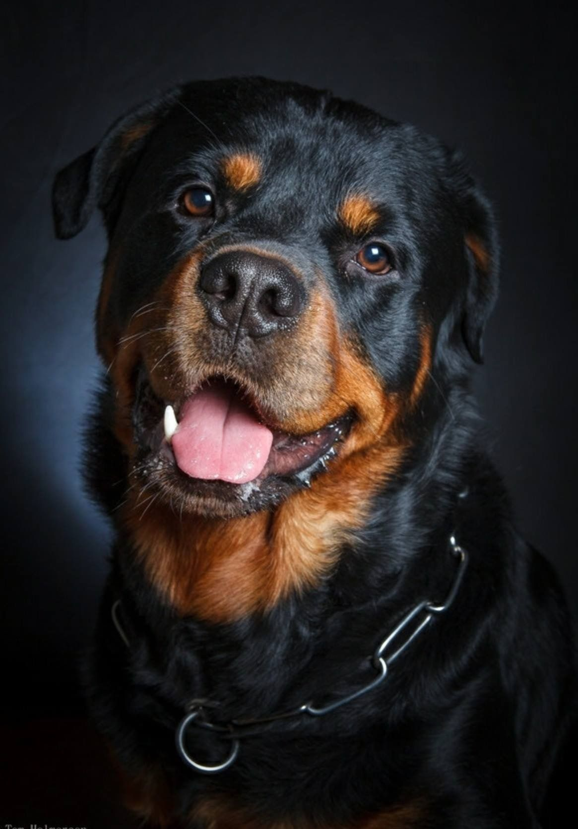 Beautiful Rottie Rottweiler Puppies Rottweiler Dog Dog Breeds