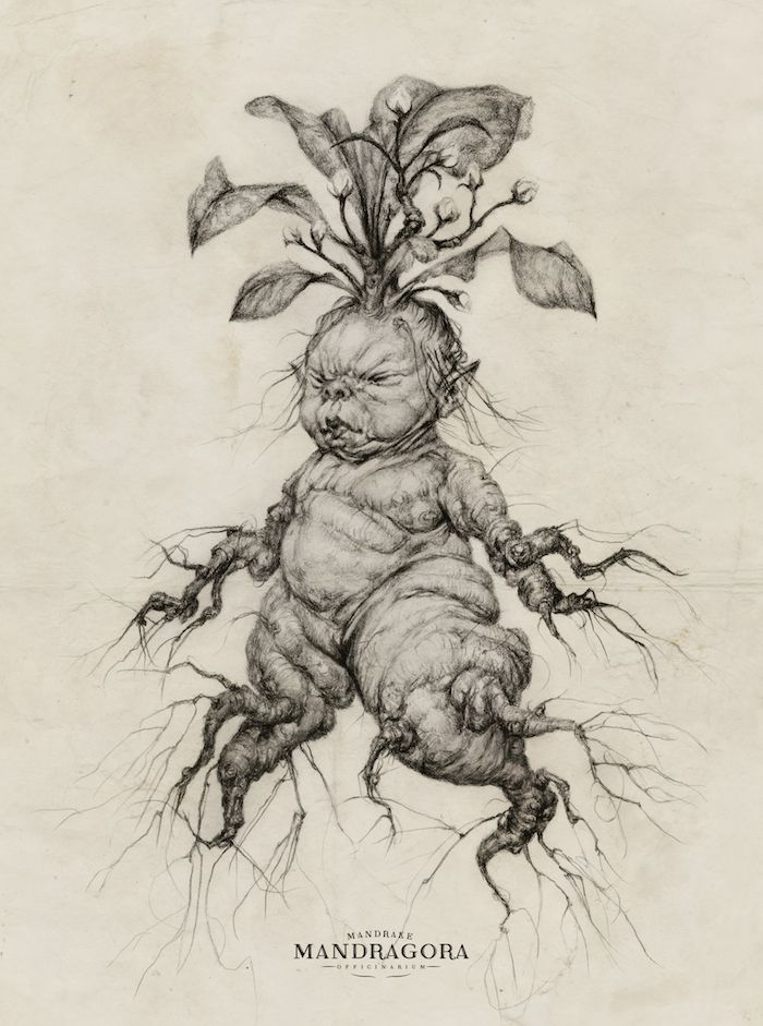Hello Witches And Wizards A Little Baby Mandrake For You On The Eve Of Mr Potters Birthday Im Working Sculpture Version Drawing Really Helps