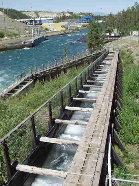 Whitehorse Fish Ladder This Is The Longest Wooden Fish