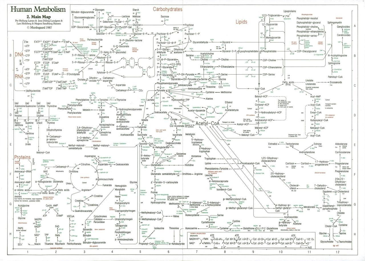 Davidbenque Map Of The Human Metabolism