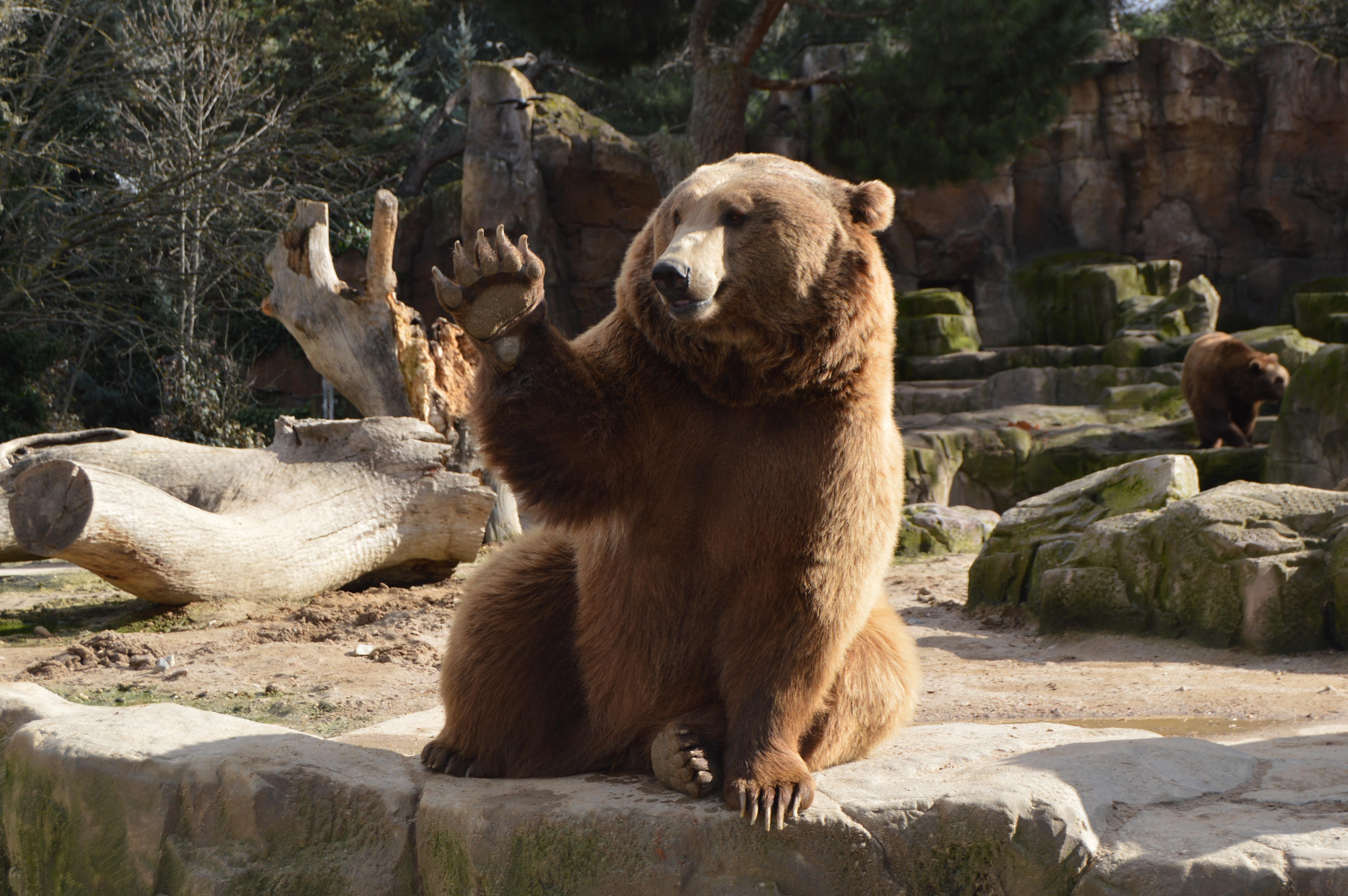 Waving Bear Cute