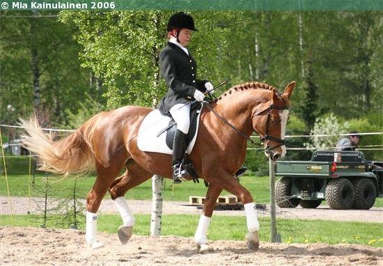 Estonian Native mare Ramona