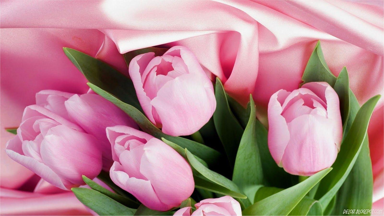 Wallpaper Bunga Tulip