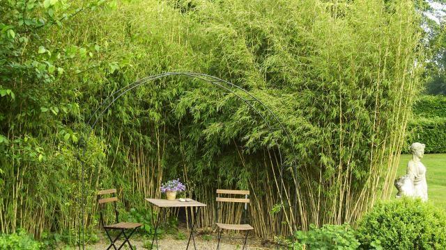 bambus eignet sich gut zur gartengestaltung bambusgarten. Black Bedroom Furniture Sets. Home Design Ideas