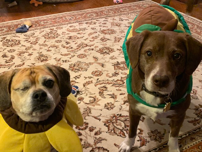 Truman And Buddy Buttigieg Firstdogssb Twitter Raining Cats And Dogs Dogs Pet Sitters