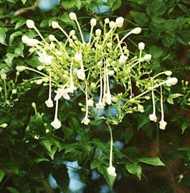 un arbre Martin le 1er Avril 2020 trouvé par Martine - Page 3 5b5cd3014ffb102bb05f63bd298e9eea