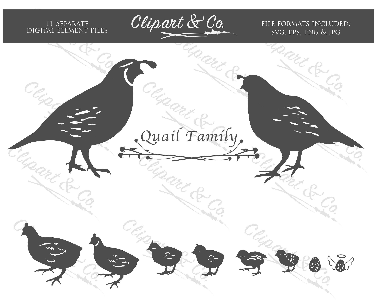 flying-quail-clipart-wallpaper-1.jpg 500×500 pixels   Game birds, Birds,  Beautiful birds
