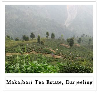 Darjeeling:- Dorje (Thunderbolt)+ling(place)= Darjeeling, The world's tea capital and most popular tourist destination of India. Enjoy the famed Mountain Railways of India.