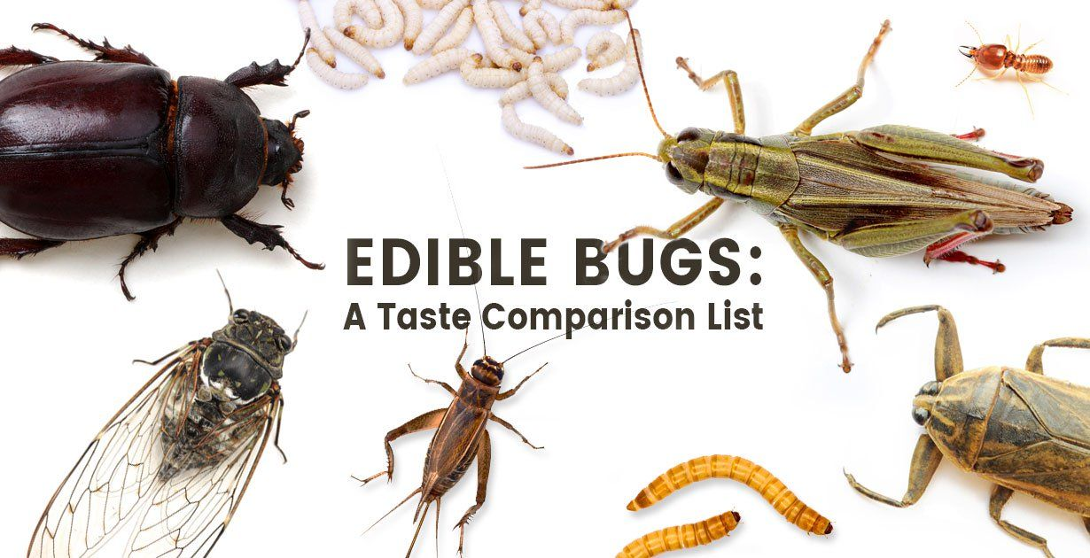 bugs.lt