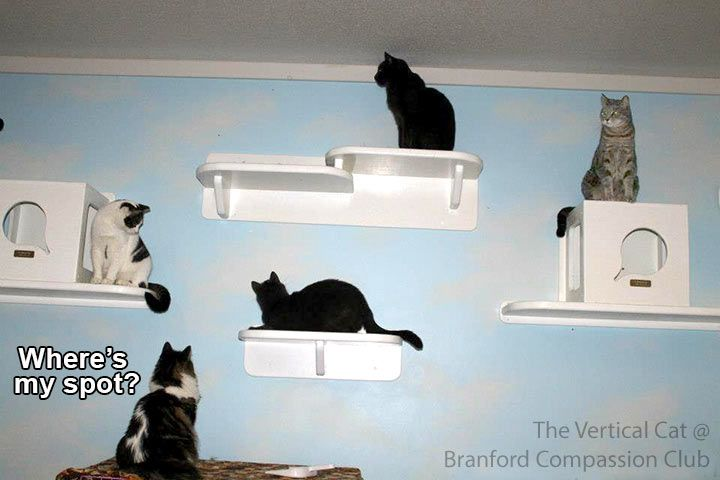 The Vertical Cat Innovative Handcrafted Cat Furniture Trees