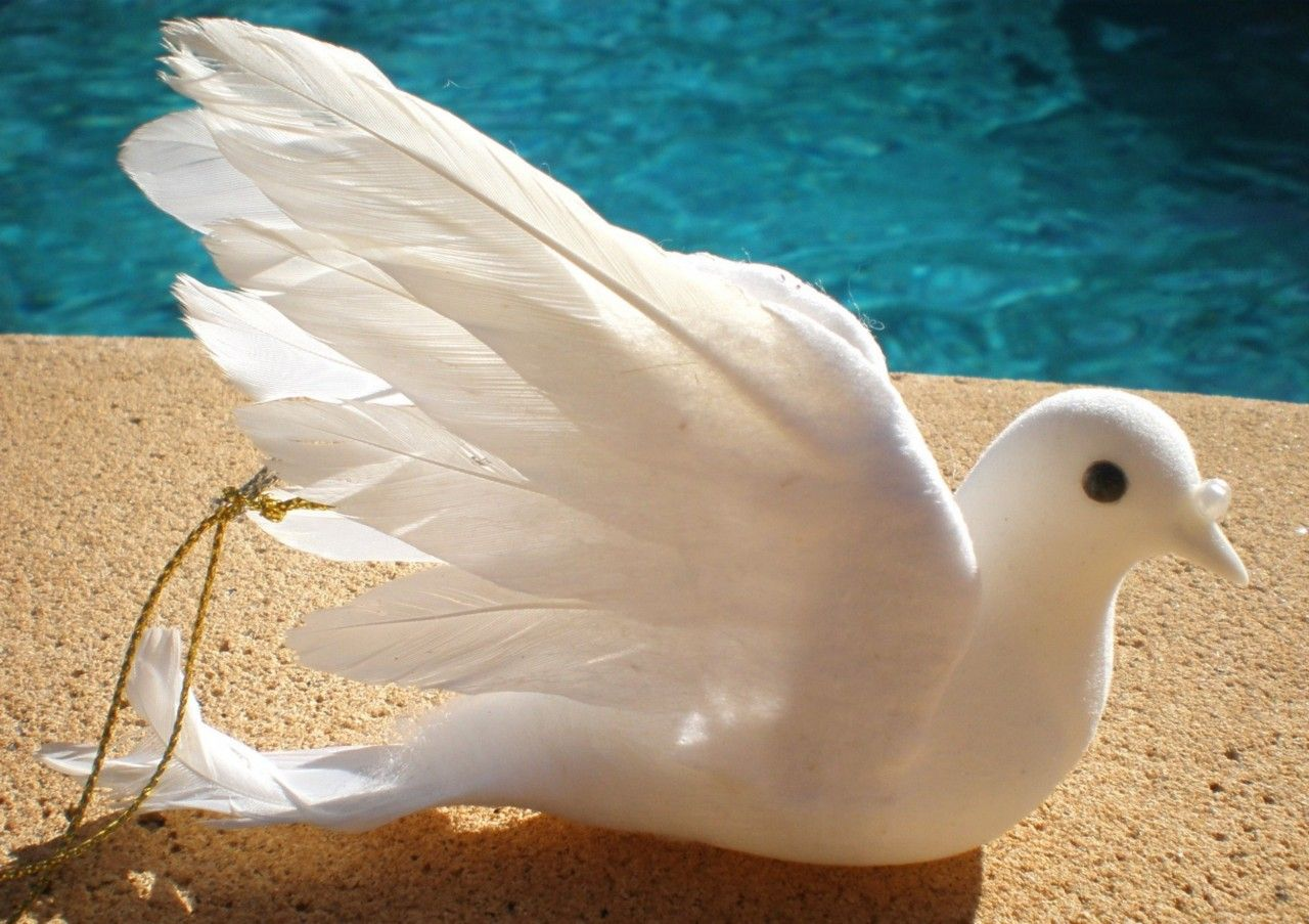 $4.99 WHITE DOVE BIRD WITH REAL FEATHERS CHRISTMAS WEDDING