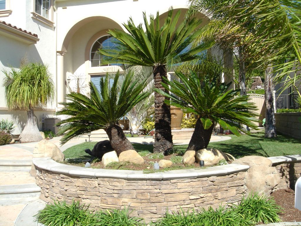 Tropical Front Yard Landscaping Ideas With Palm Trees Palm Tree